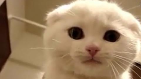 【搬运系列】他们说是最可爱的猫咪 - acfun弹幕视频